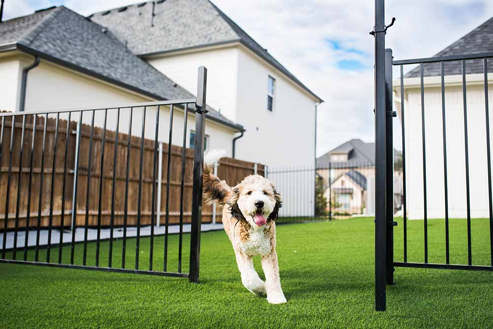 Synthetic Grass for pets at a Fort Worth home